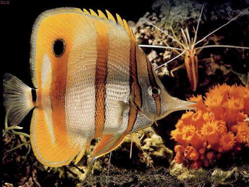 Рыбка название экзотическая рыбка 19 07