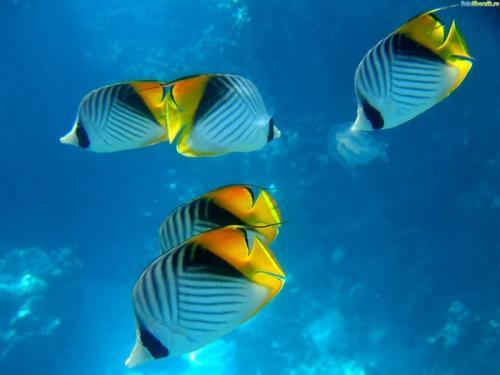 Темы рыбы подробнее о фото рыбы
