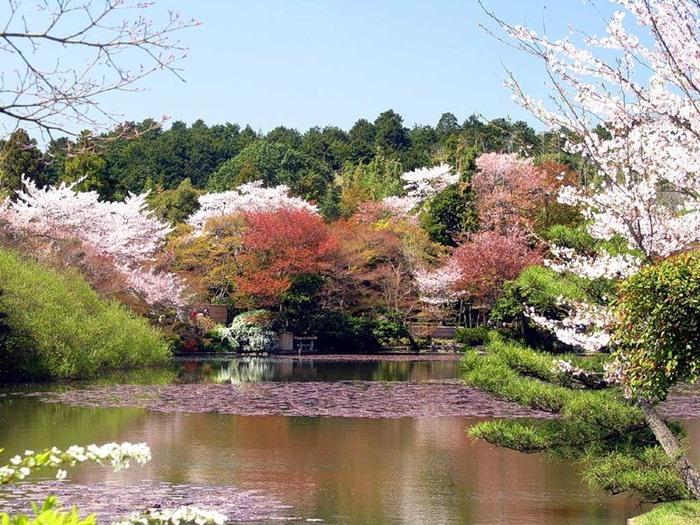 Весна природный пейзаж япония