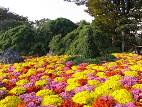 Фотоальбом весна в японии