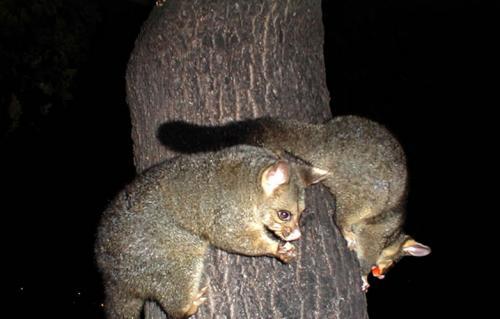 Фотоальбом животные австралии