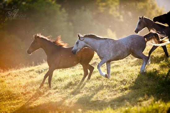 Фотоанималистика (жанр фотографии животных в фотоискусстве)
