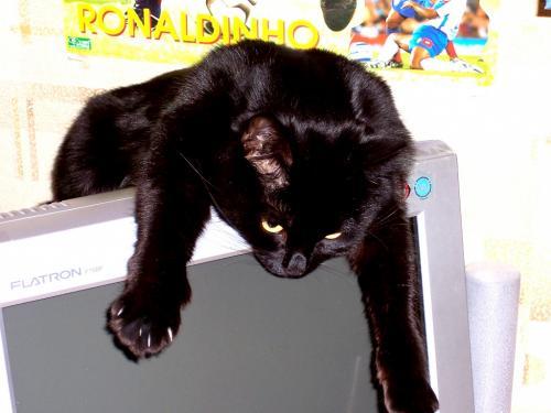 Кот на мониторе