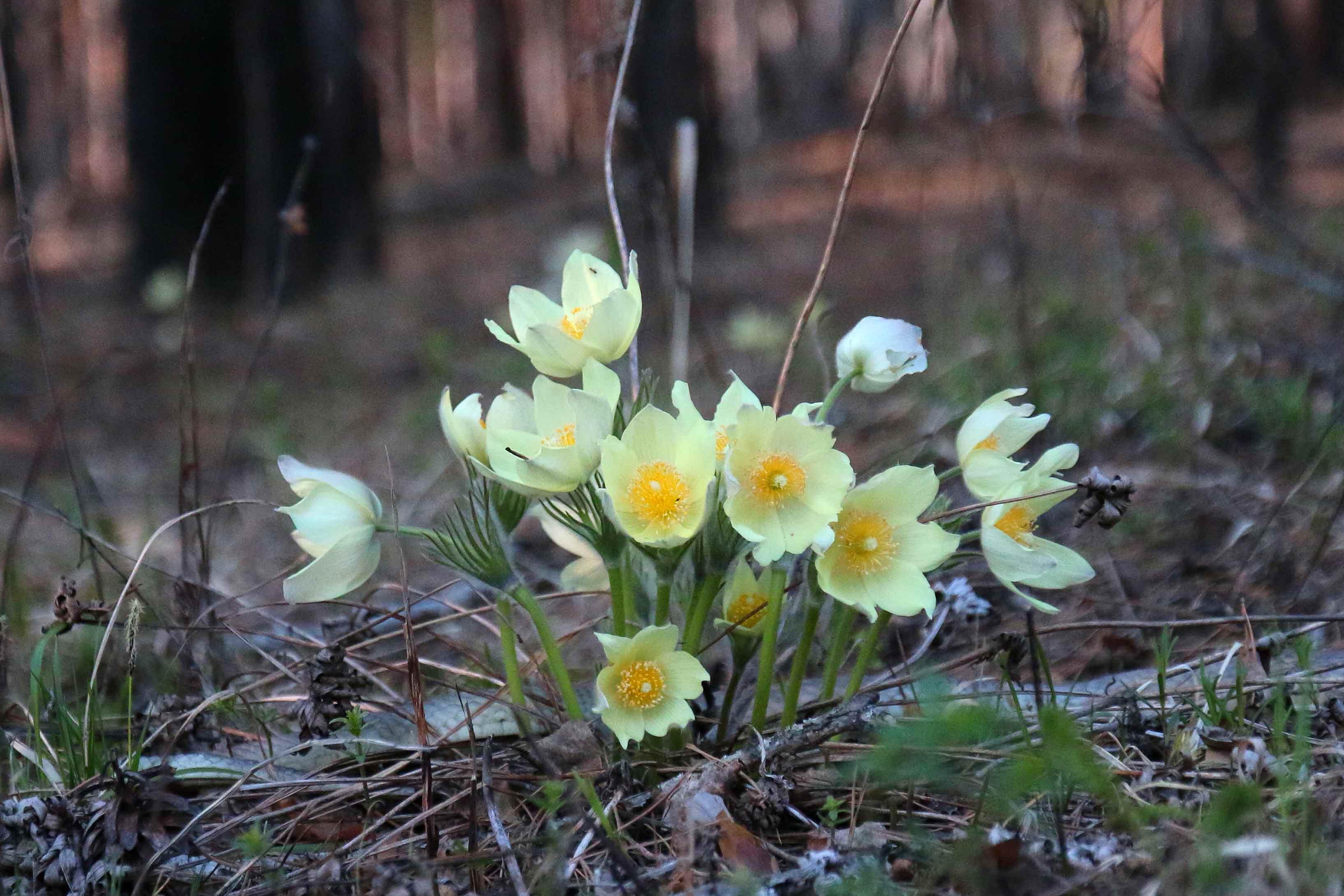 Ранние цветы леса фото